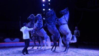 Festival international du cirque des Mureaux