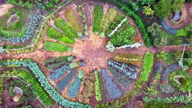 Jardin Mandala Les Mureaux