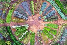 Jardin-Mandala-Les-Mureaux-453608115