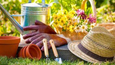 Photo of Prêter son jardin et partager les récoltes !
