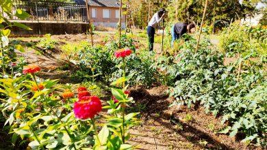 Photo of Des nouvelles des 'Jardins de la Rencontre' au parc du château de Bècheville